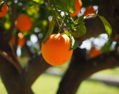 К чему снятся апельсины?