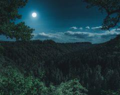 К чему снится лес?